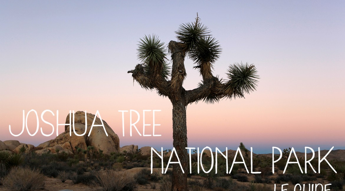 Visiter le parc national de Joshua Tree