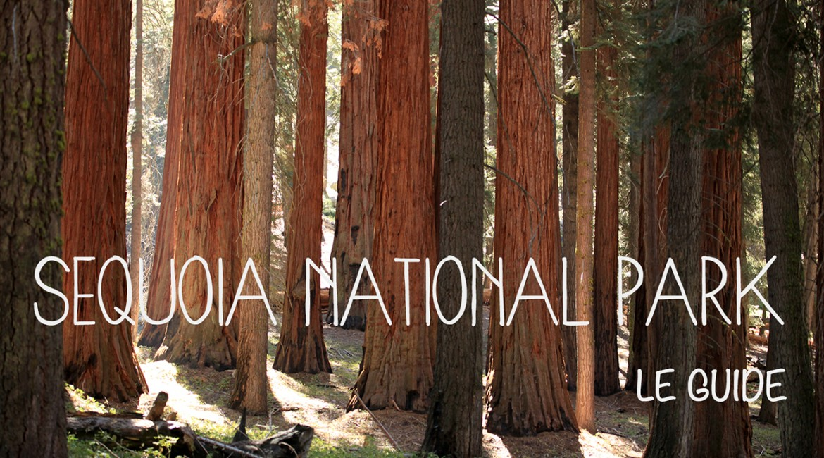Visiter le parc national de Sequoia
