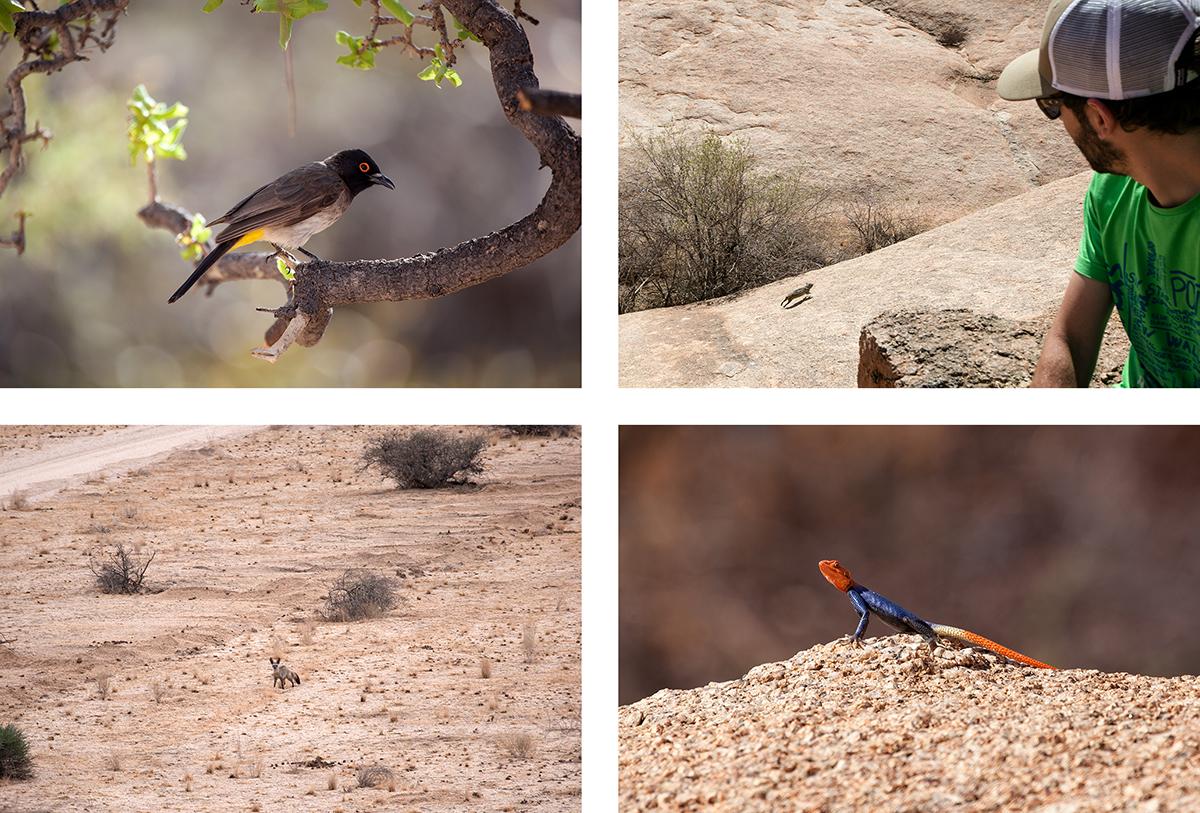 animaux-spitzkoppe-namibie