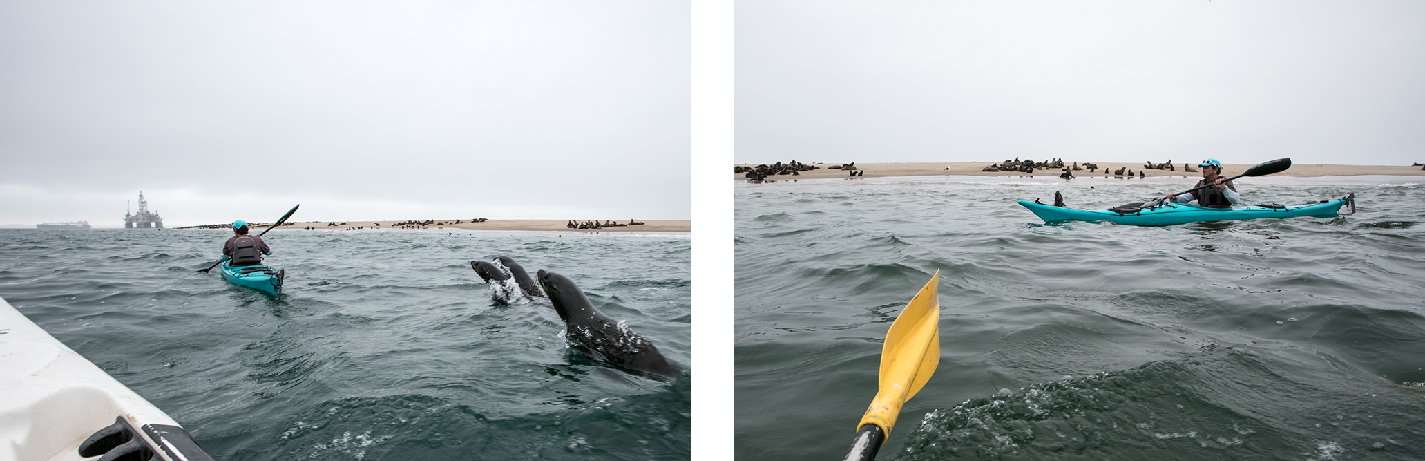 otaries-kayak-namibie