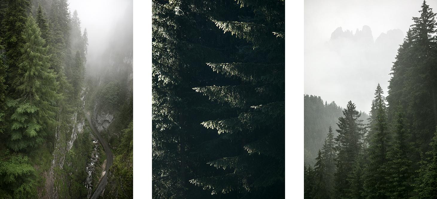 Dolomites forets