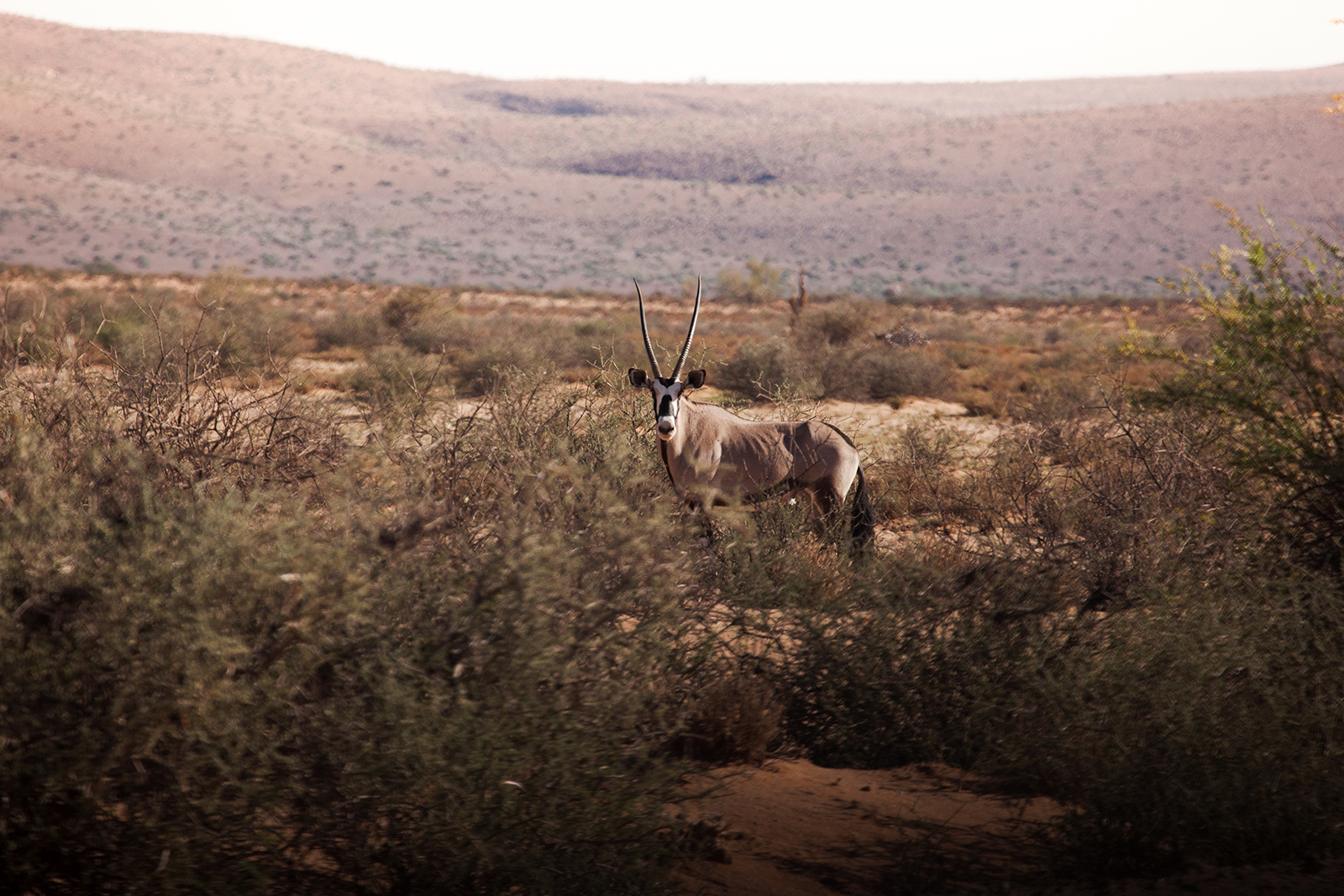 oryx canyon fish river namibie