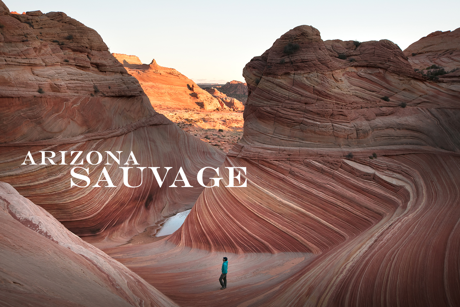 Arizona Sauvage, Lettre d'amour à The Wave