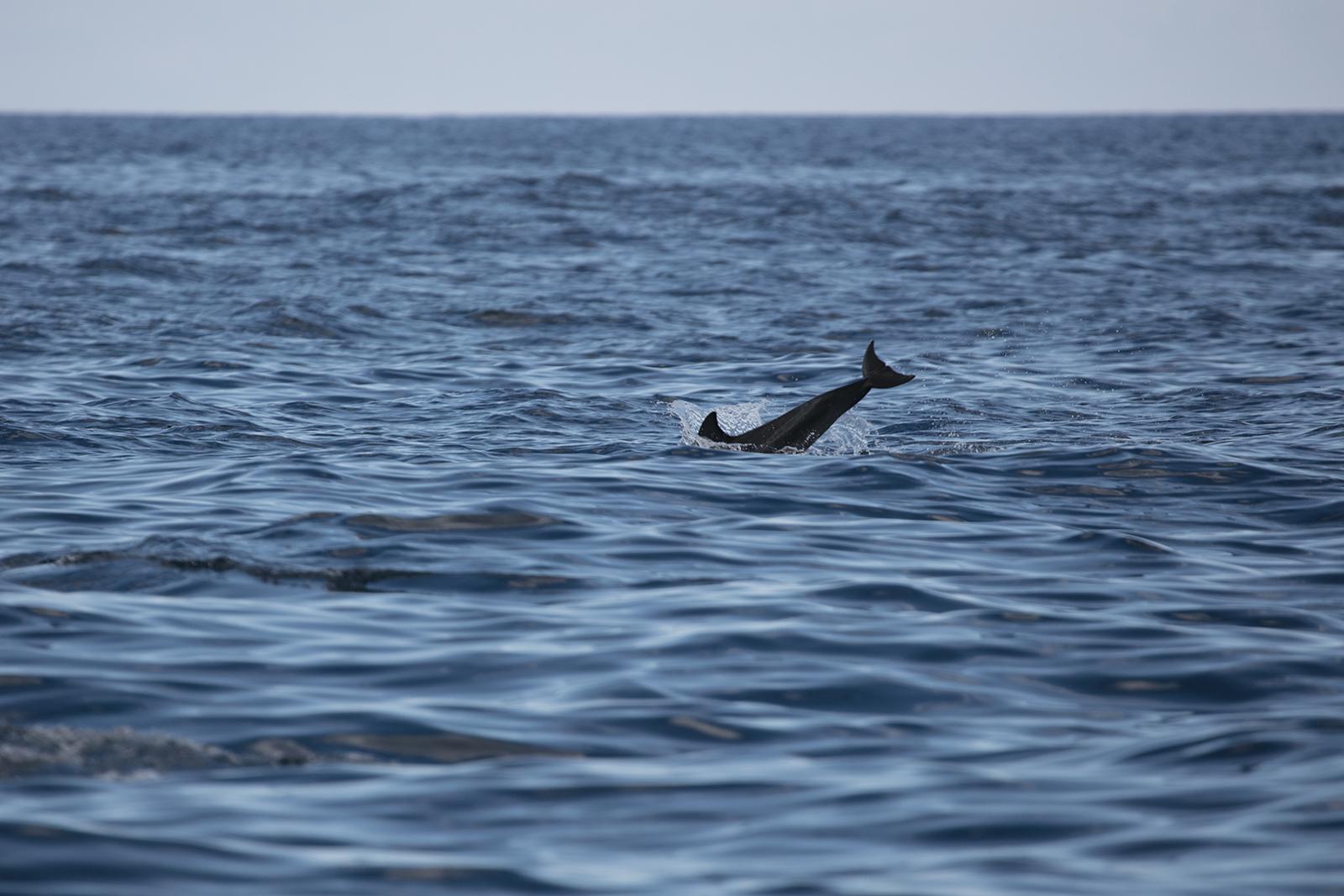 Voir les dauphins à l'ile maurice