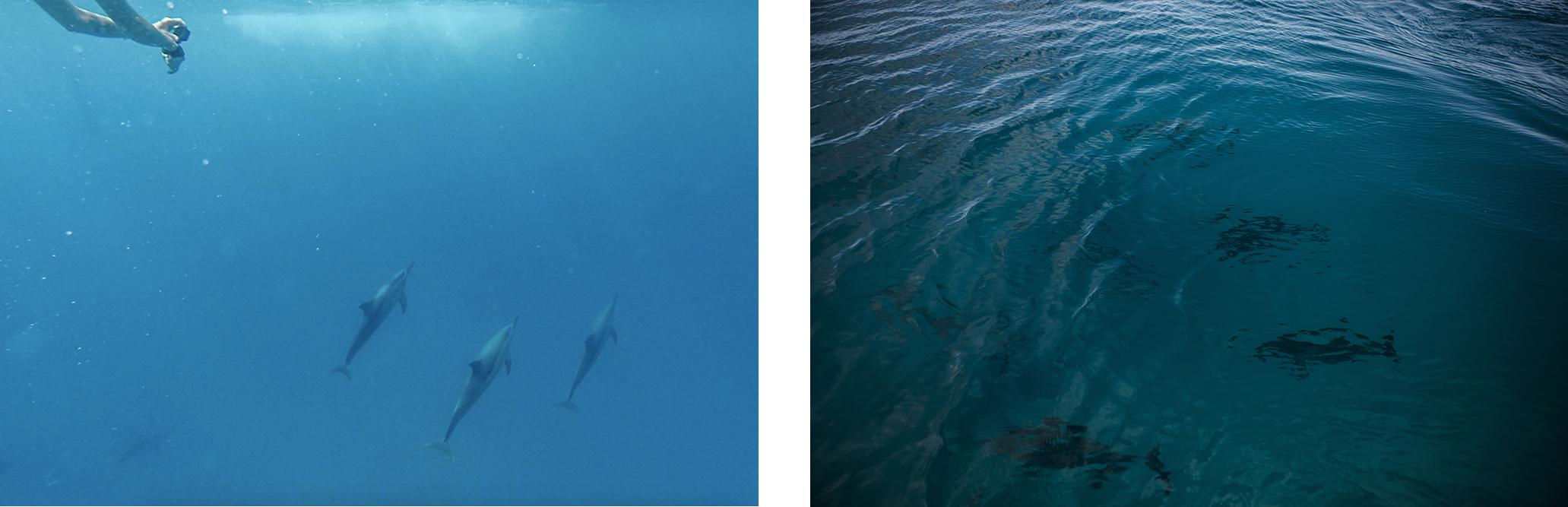 nager avec les dauphins ocean indien