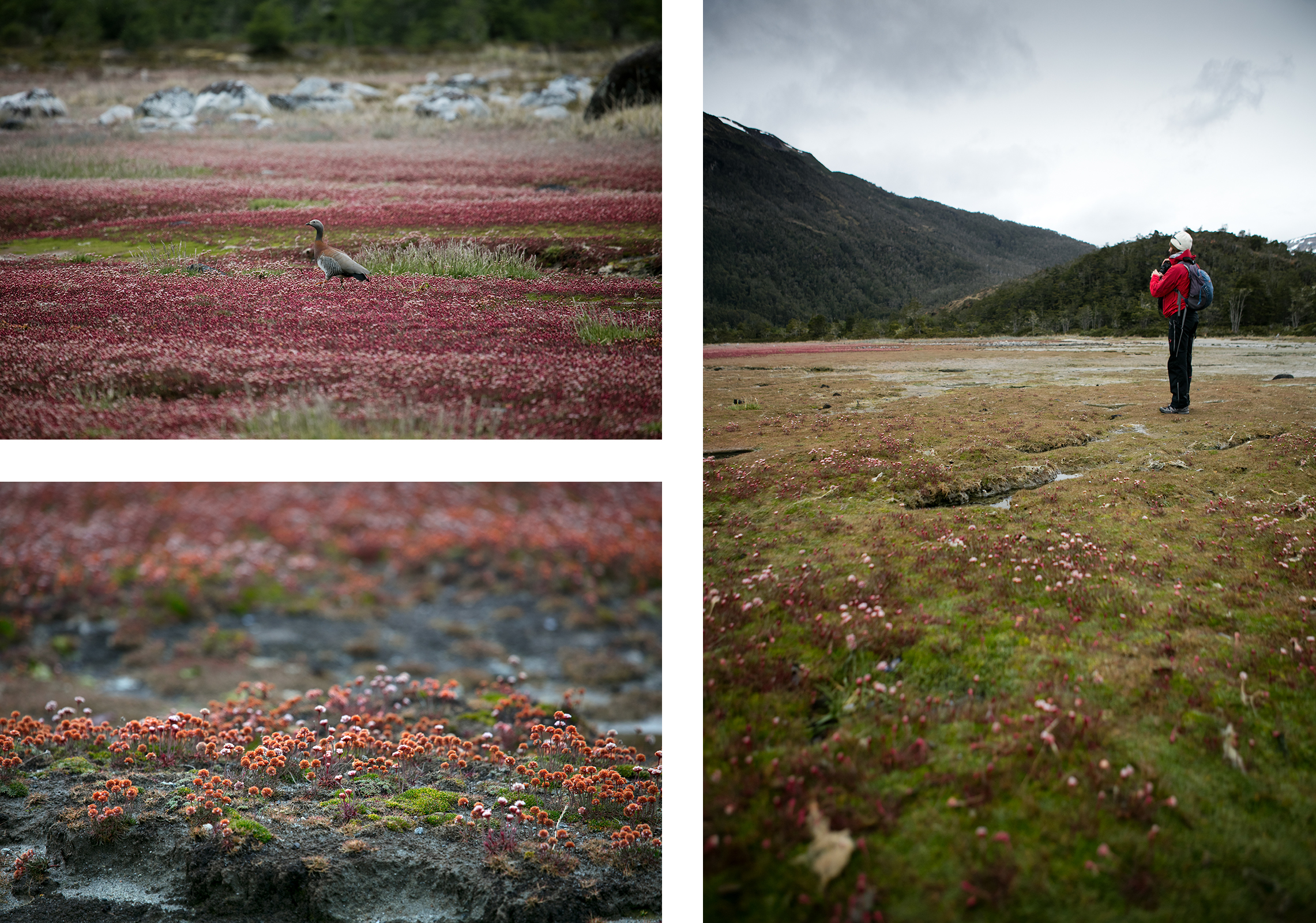 croisière australis Patagonie Terre de feu