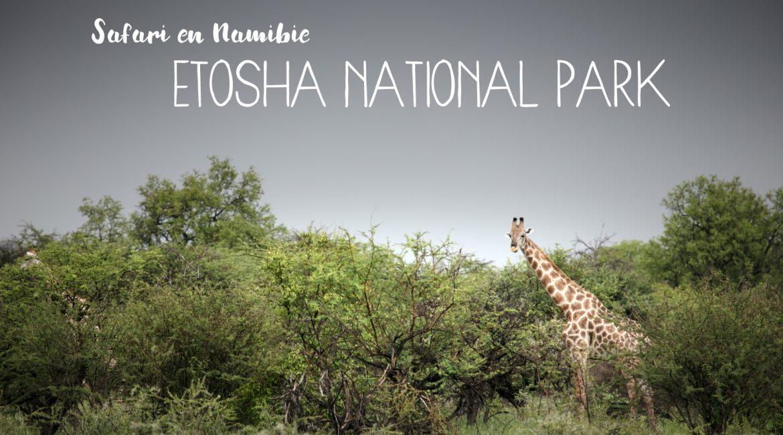 Un safari en Namibie, dans le parc national d'Etosha