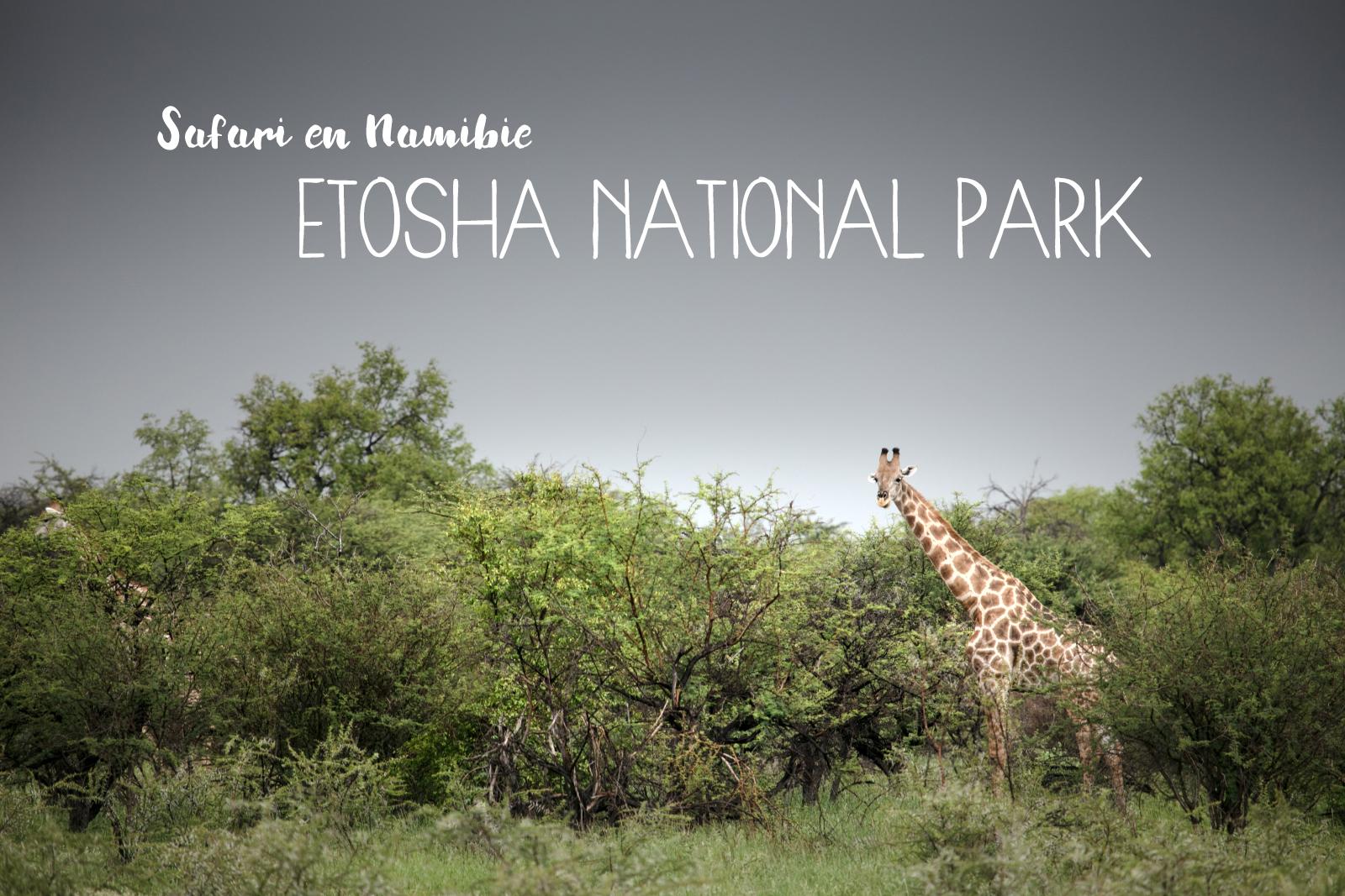Que voir et que faire dans le parc d'Etosha en Namibie