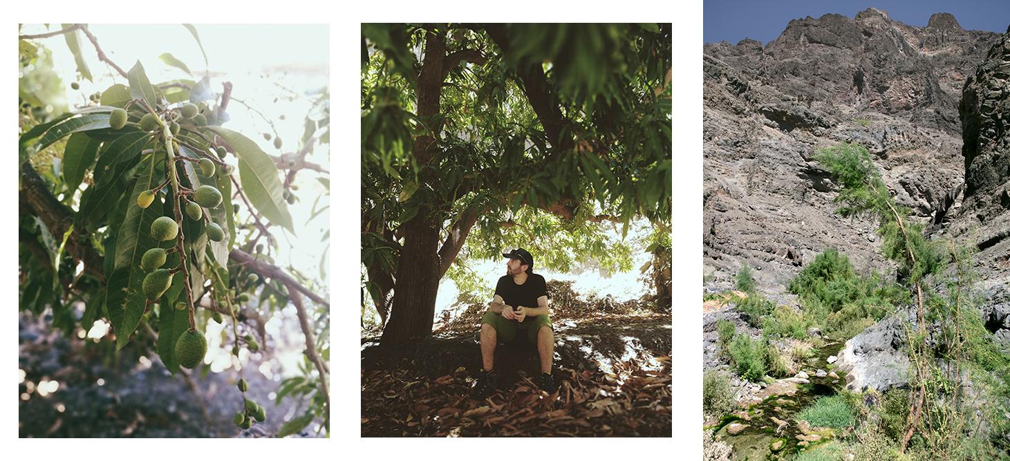 Pausa à l'ombre d'un manguier au Cap Vert