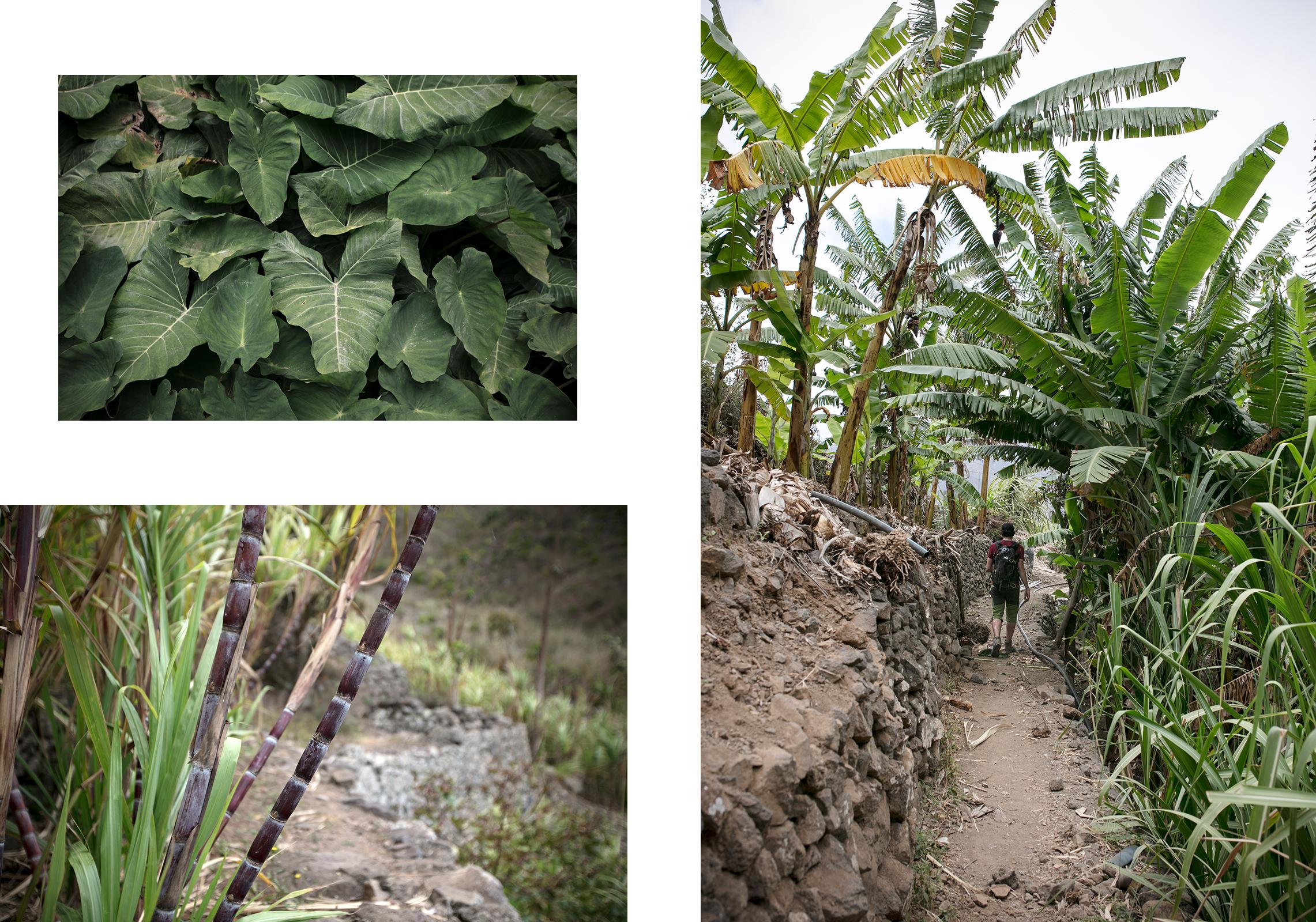 Balade dans les plantations du Cap Vert