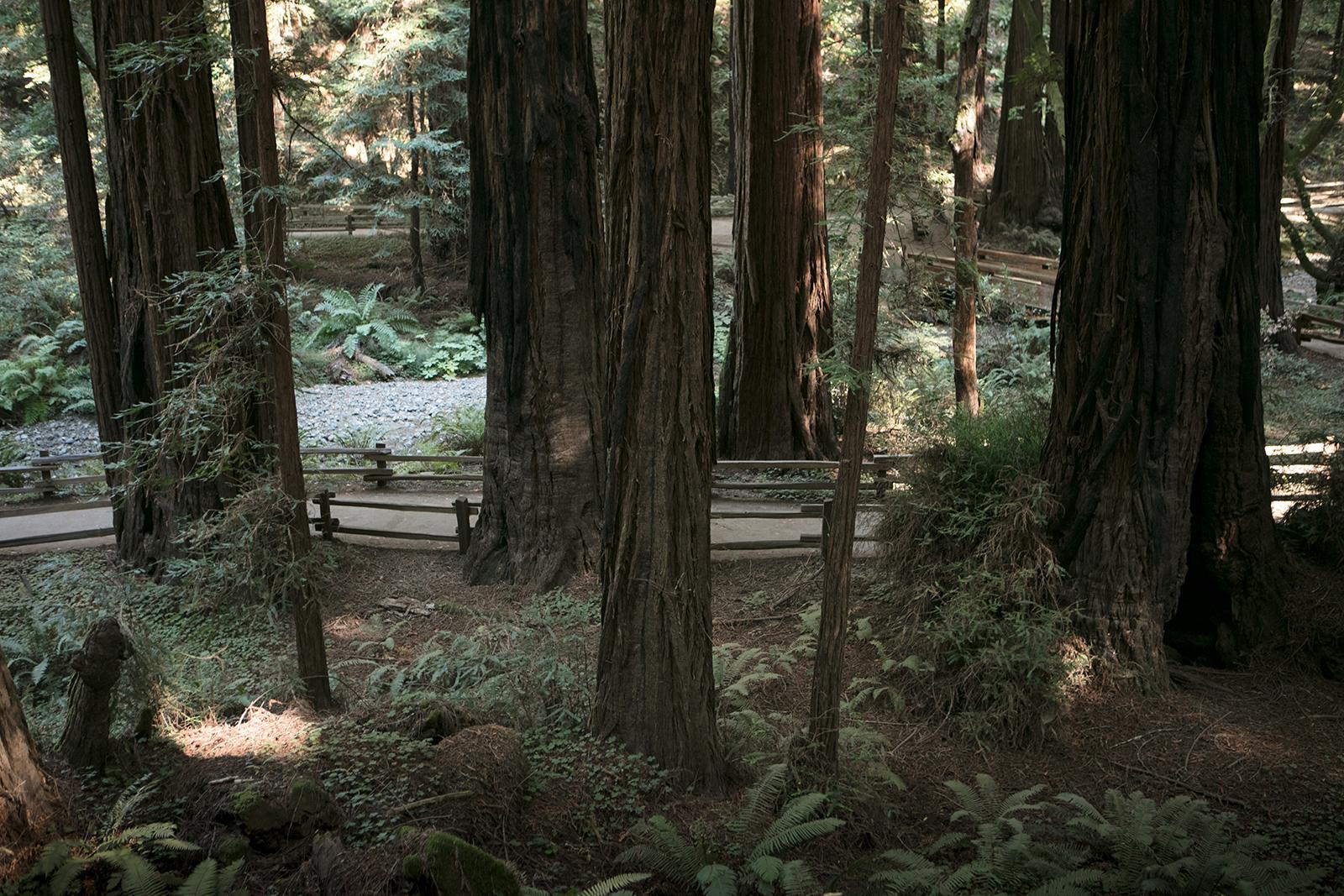 Randonner à Muir Woods