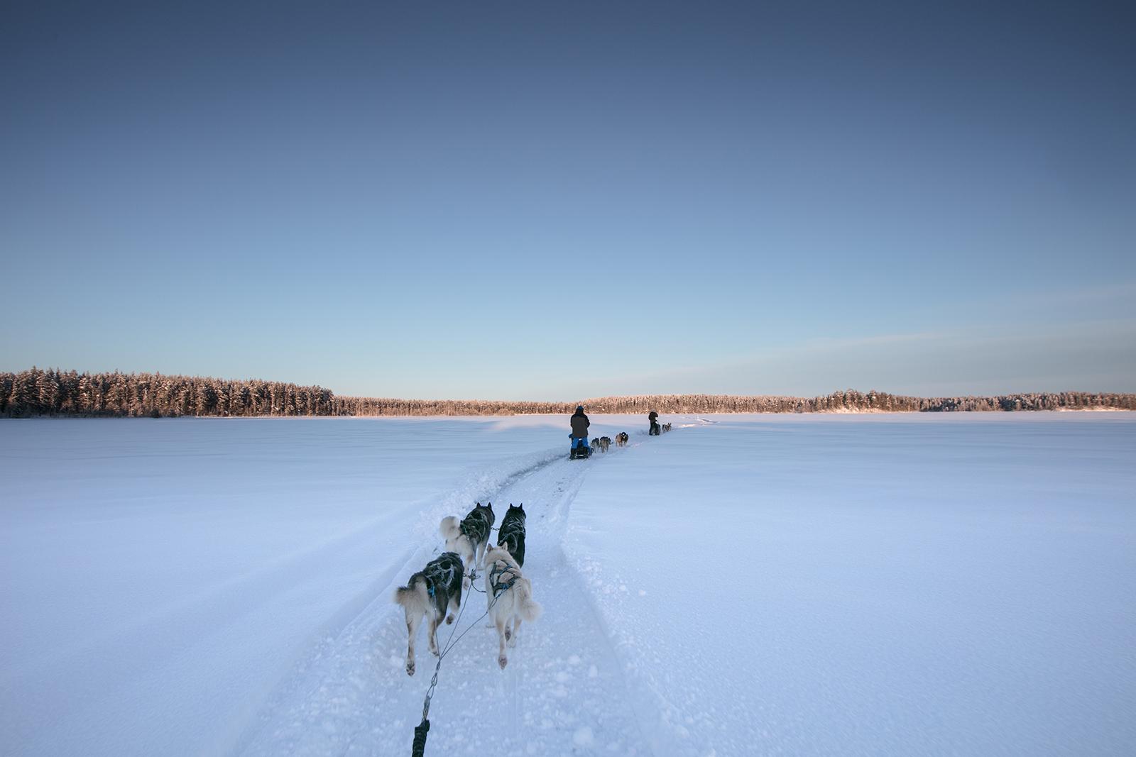 Raid traineau à chien sur la Taiga Finlandaise