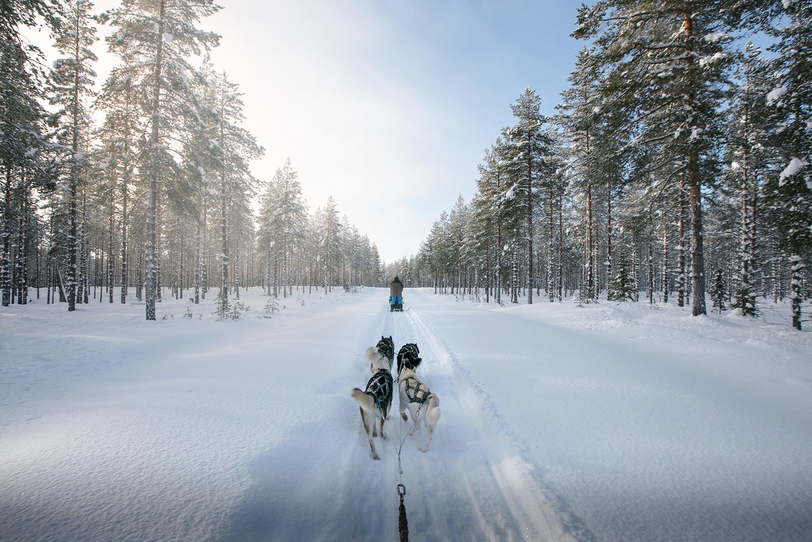 Où faire du chien de traineau en Finlande ?