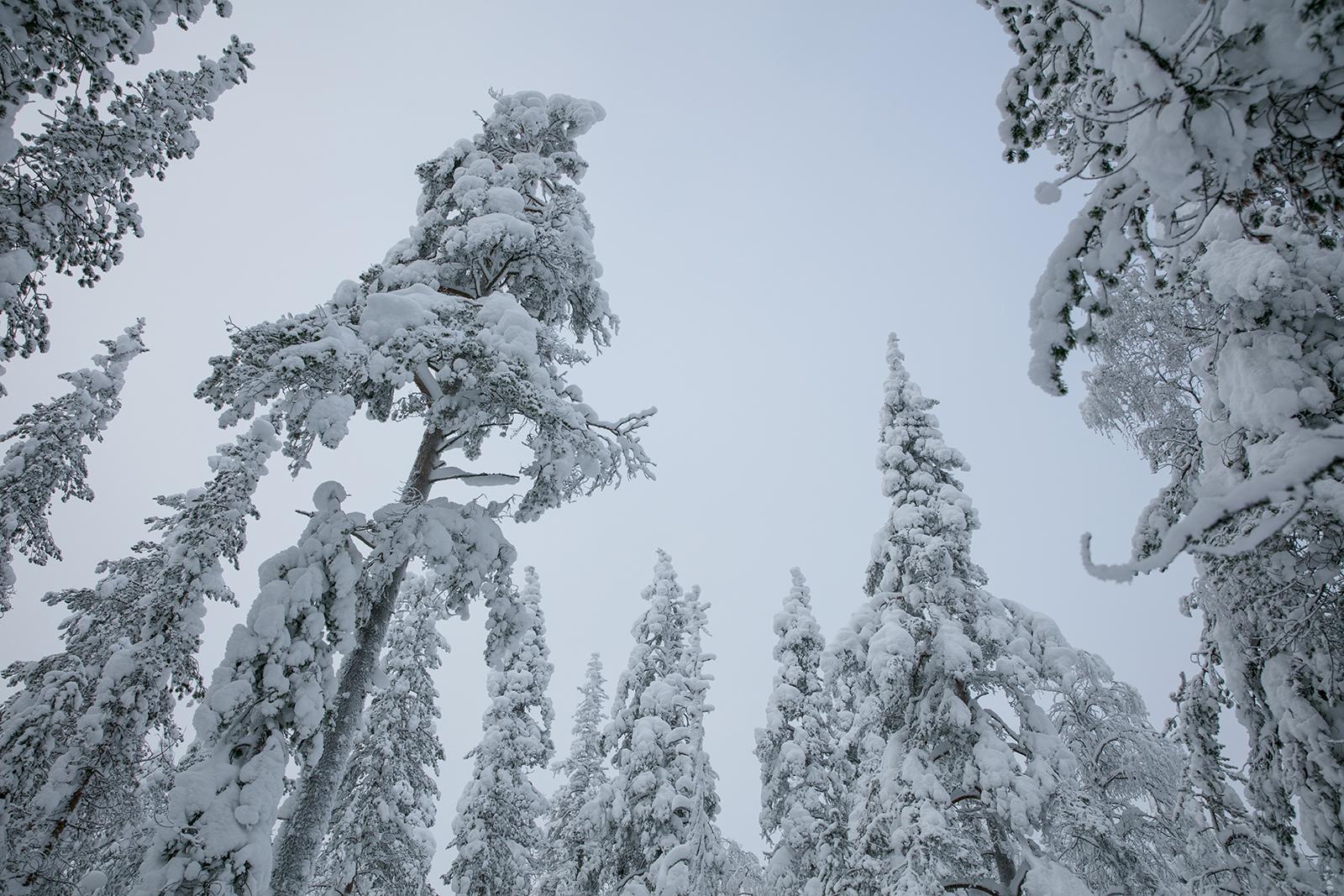 Une Semaine Magique En Finlande En Hiver Trip In Wild