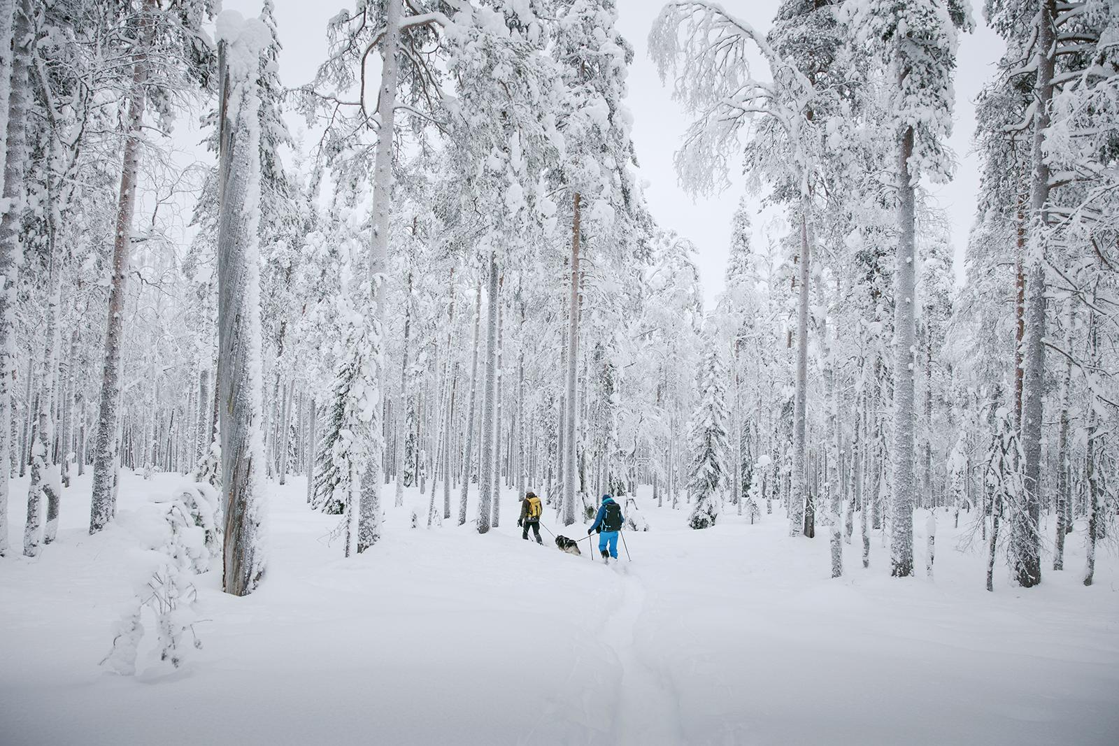 Randonnée raquettes en Finlande en hiver