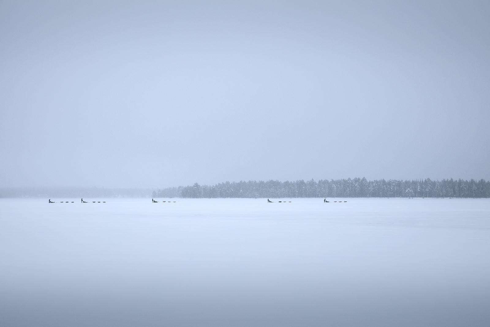 Chien de traîneau en Finlande