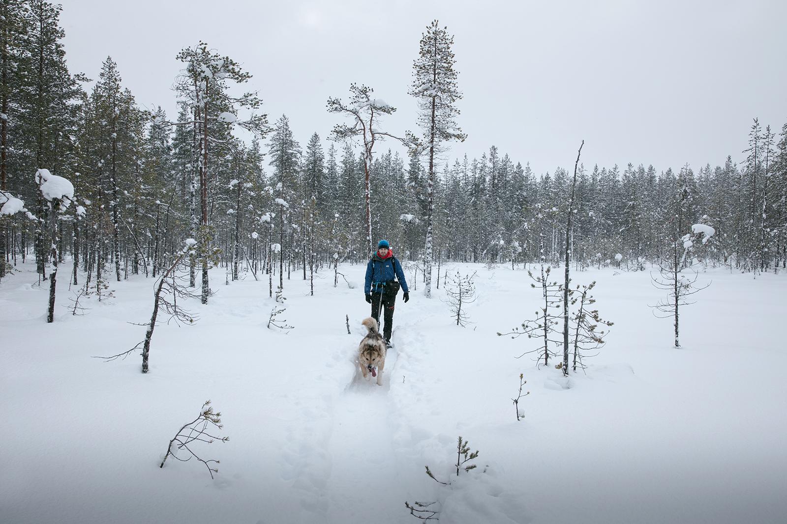Activité hivernale en Finlande, la cani rando