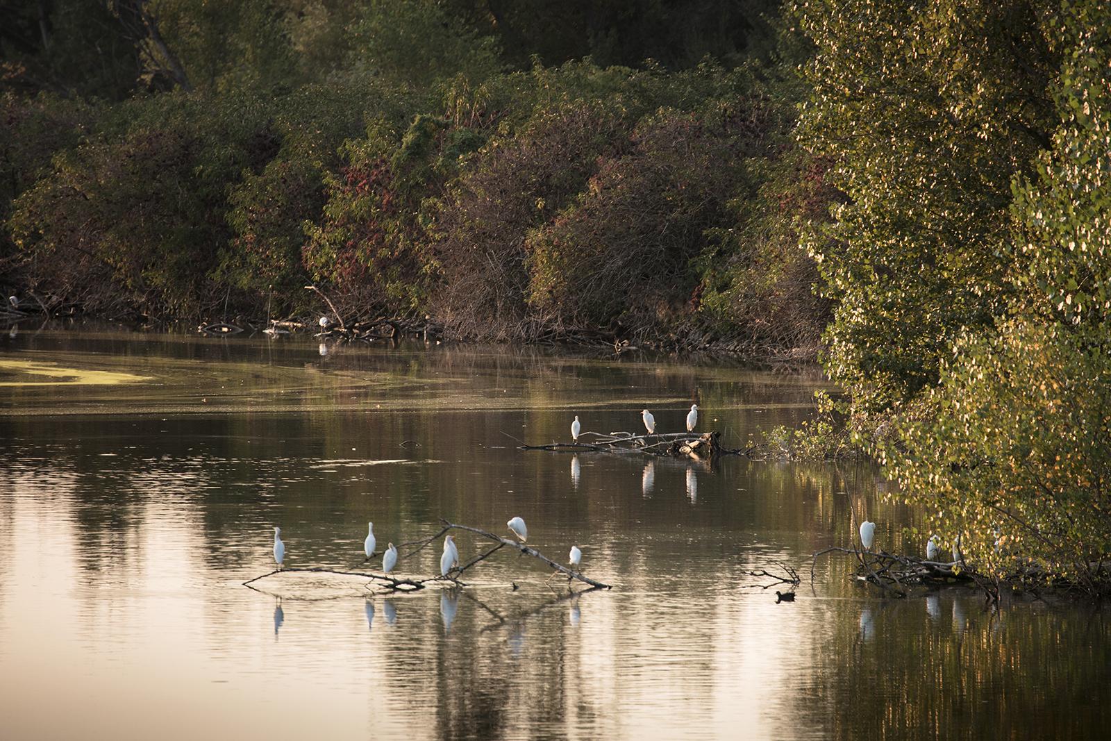 Visiter la réserve naturelle dans le Tarn