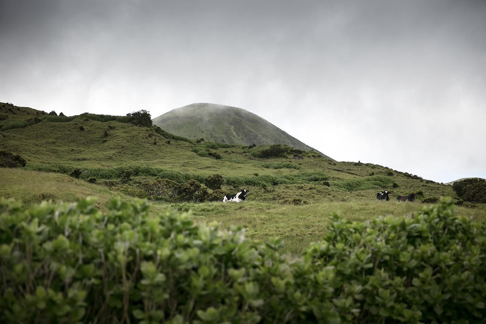 Montagnes de Sao Jorge