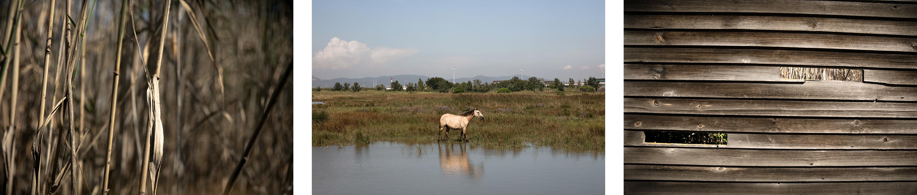 Visiter le Delta del llobregat