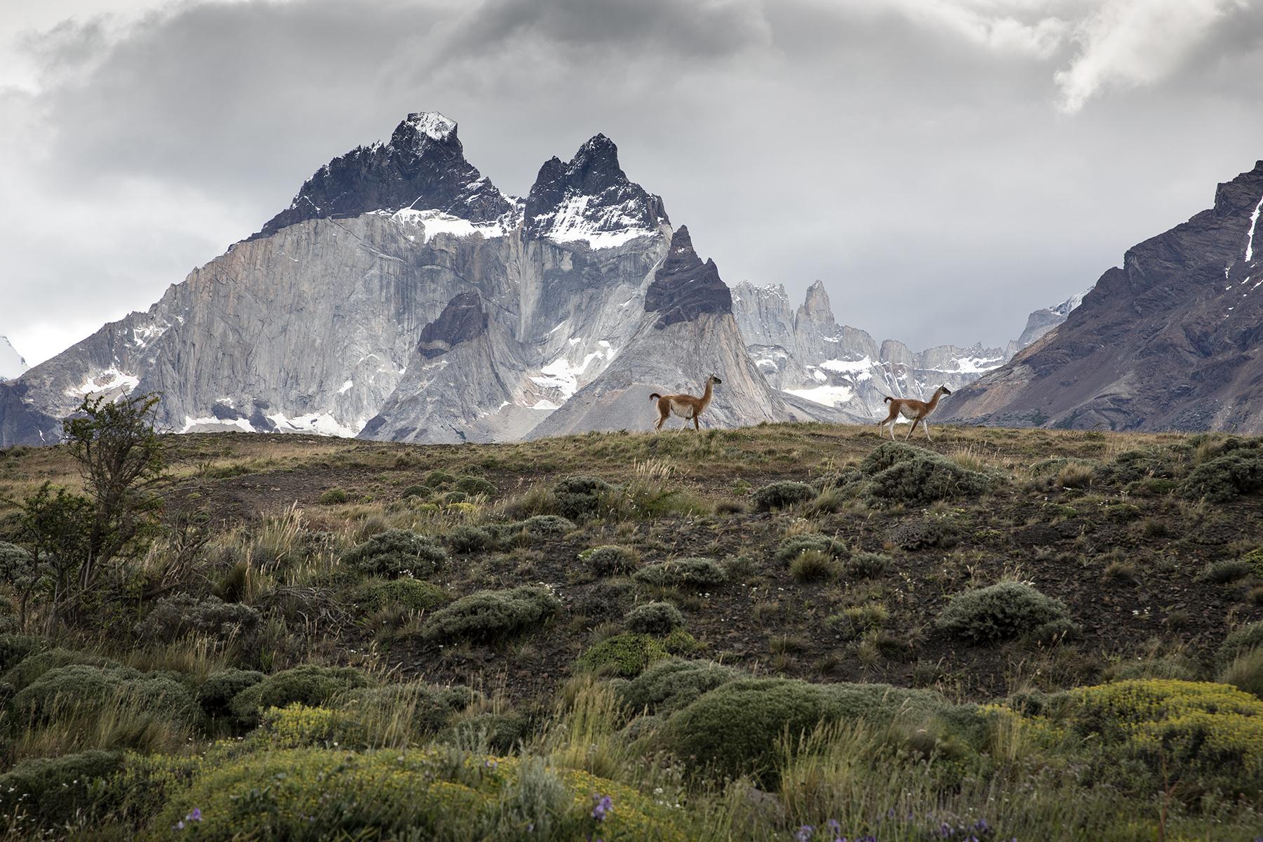 Observer la faune sauvage au Chili