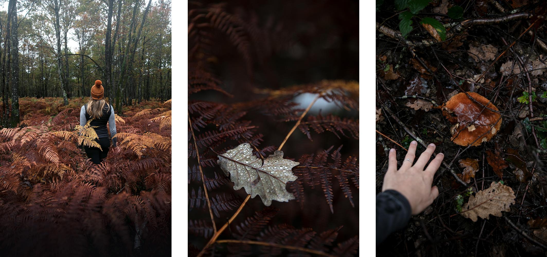couleurs d'automne en france
