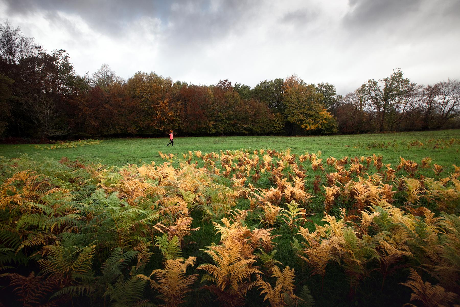 Sommet du Fragne à l'automne