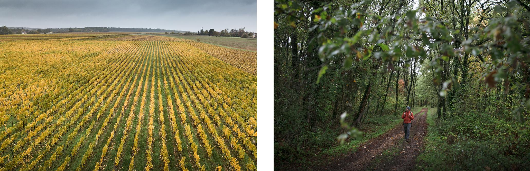 Randonner à l'automne dans les vignobles de France