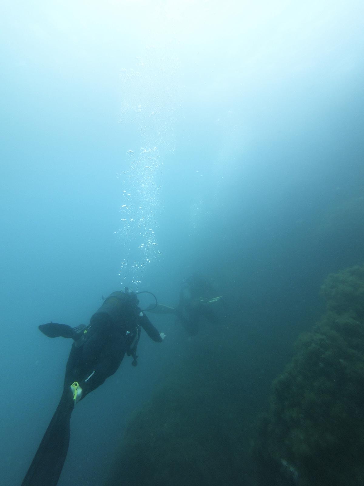Plongée reserve naturelle de Cerbère